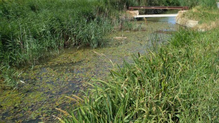 AVA-ASAJA afirma que l'Albufera no existiria sense la gestió de l'aigua que duen a terme els arrossers i qüestiona el manteniment del Tancat de la Pipa