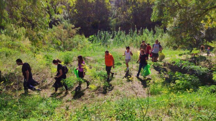 Alzira participa a la campanya de neteja del riu