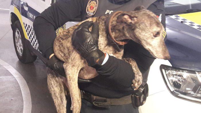 La Policia Local d'Alaquàs rescata un gos tras la denúncia veïnal d'un presumpte cas de maltractament
