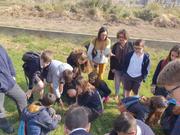 Alumnat del col·legi L'Encarnació, amb la col·laboració de l'Ajuntament, reforesten diverses zones de la ciutat