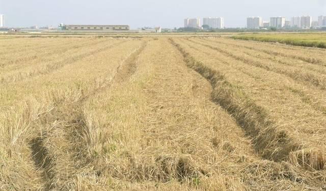 La Conselleria d'Agricultura i Transició Ecològica proposa als municipis de l'Albufera la creació d'un ens únic que coordine la logística de la palla de l'arròs