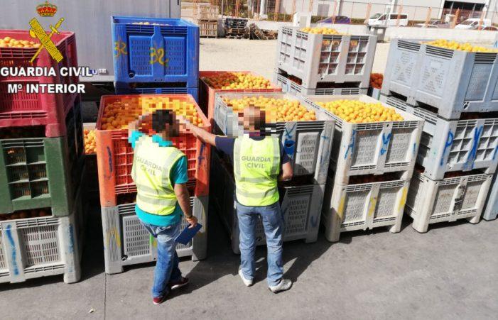 La Guàrdia Civil deté a una persona i investiga a 45 per delictes d'apropiació indeguda i falsedat documental  d'al voltant de 41.000 kg de taronges  a la comarca de la Ribera Alta i Baixa