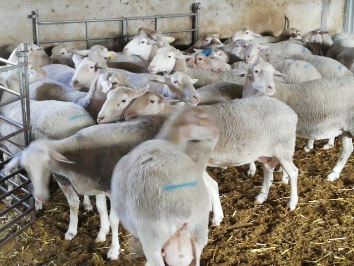 La quantitat de 7 milions d'euros recaptats des de 2012 no ha evitat que el consum d'aquesta mena de carns es reduïsca