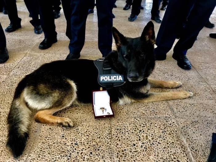 Mor Bingo el primer ca de la Unitat Canina d'Alaquàs