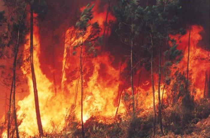 Transició Ecològica aprova durant l'any 2020 Plans Locals de Prevenció d'Incendis Forestals en 103 municipis de la Comunitat Valenciana