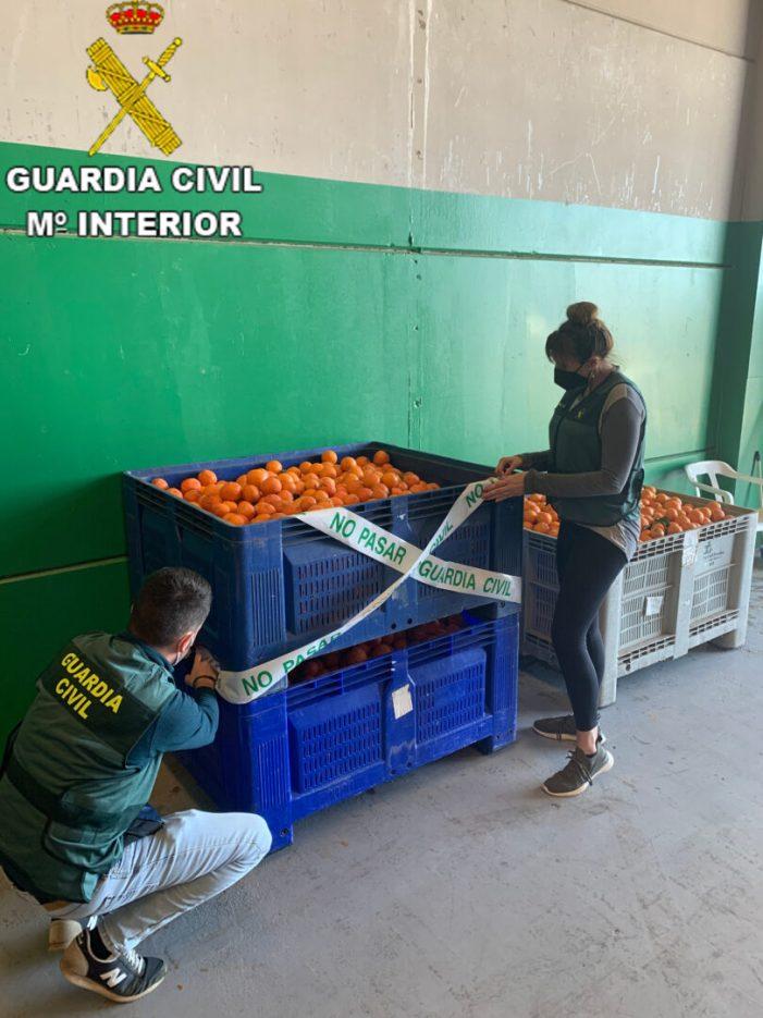La Guàrdia Civil deté a una persona i investiga a altres dues per un delicte continuat de furt de 100 tones de taronges en les localitats de Picassent i Alginet