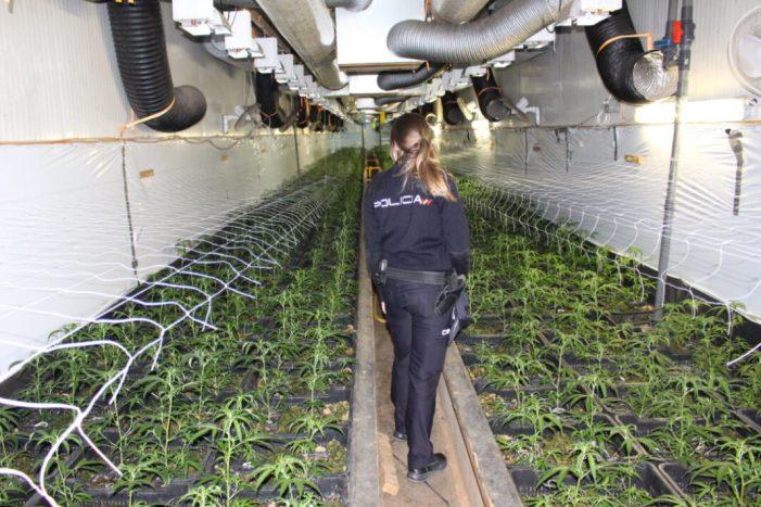 La Policia Nacional de València desmantella una plantació de marihuana indoor amb més de 4.600 plantes i deté a dues persones