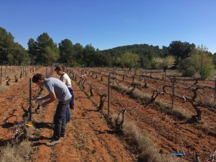 Els resultats del projecte valencià AQUA VID per a combatre les malalties fúngiques de la vinya són molt prometedors i demostren la utilitat de la tecnologia emprada