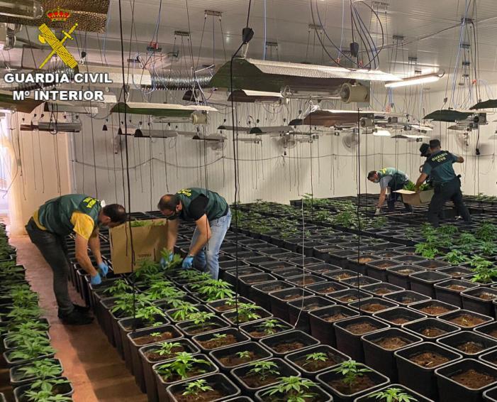 La Guàrdia Civil desarticula una organització criminal que es dedicava al cultiu de marihuana en la localitat de Corbera