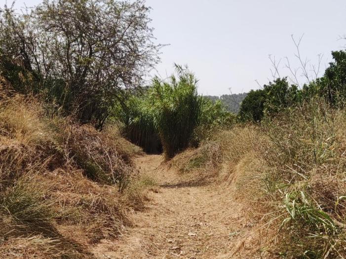 Alcàntera de Xúquer combat l'atur agrícola estacional amb la contractació de 19 persones