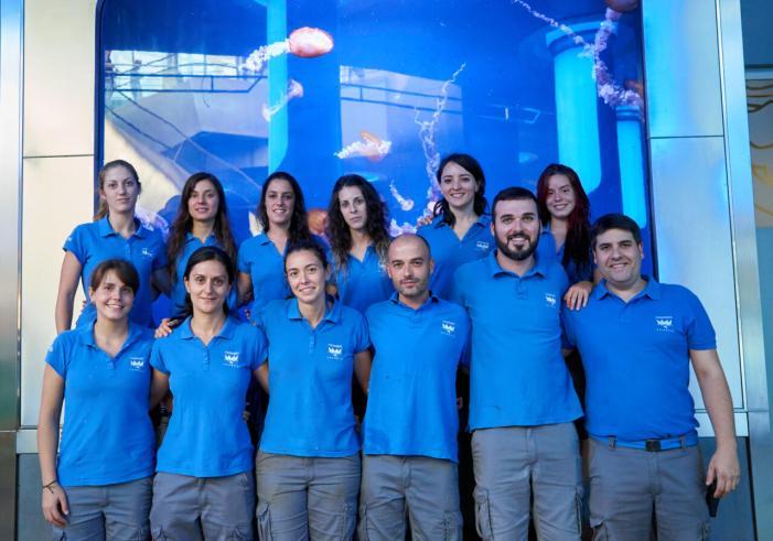 El Oceanogràfic i el ICM-CSIC uneixen forces per a ampliar el coneixement sobre les meduses