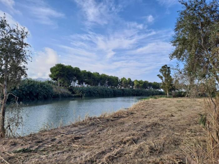 L'Ajuntament de Sueca posa en valor la zona de l'assut del riu retirant tot el canyís invasor
