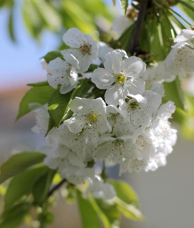 La mia primavera
