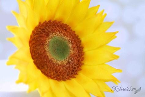 Sonnenblume aus Zucker