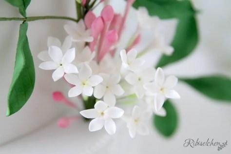 Zuckerblüten