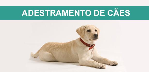 cursos de adestramento e comportamento, adestramento de cães, ricardo tamborini, adestrador, especialista em comportamento, canino