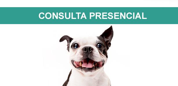 Consulta comportamental presencial, Comportamento Canino - Consulta Presencial, consulta comportamental presencial