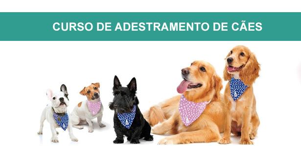 curso de adestramento de cães e marketing, cursos de adestramento e comportamento