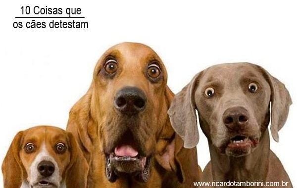 10 Coisas que os cães detestam