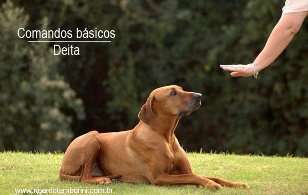 Ensine o seu cão a deitar | Comandos básicos