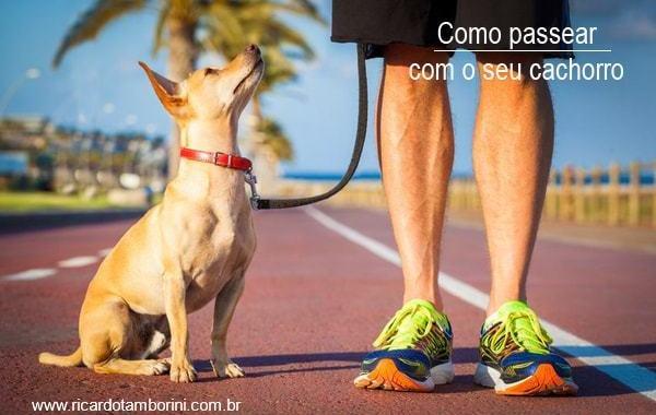 Como passear com o seu cachorro | Comando junto