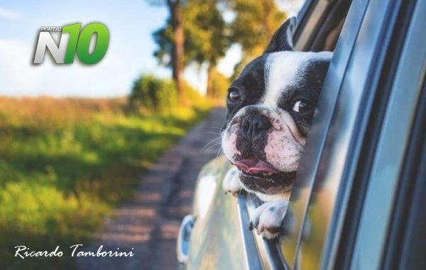 Seu cão gosta de andar com a cabeça para fora da janela do carro?