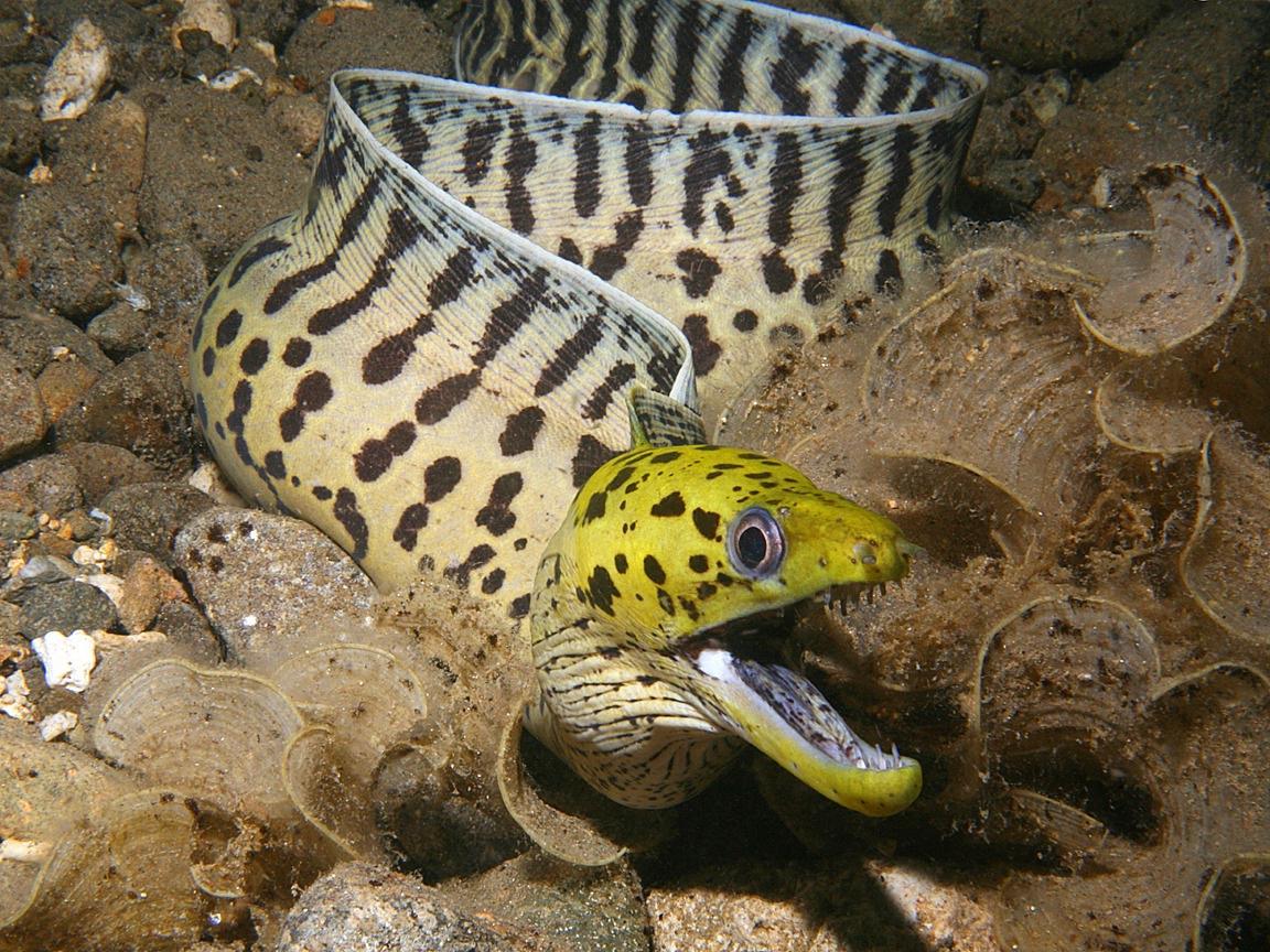 Moray eels | Biology & Geology 4 ESO
