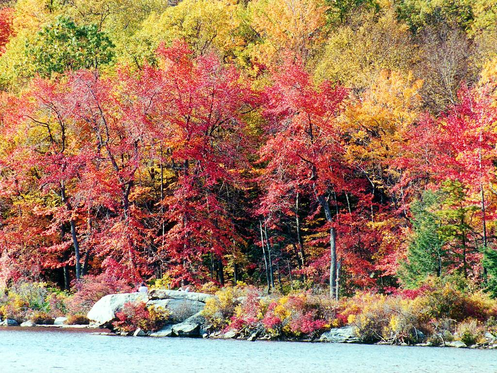 Fall In Michigan Wallpaper American Seasons And Celebrations Wallpaper