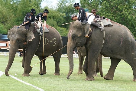 elephantpolo