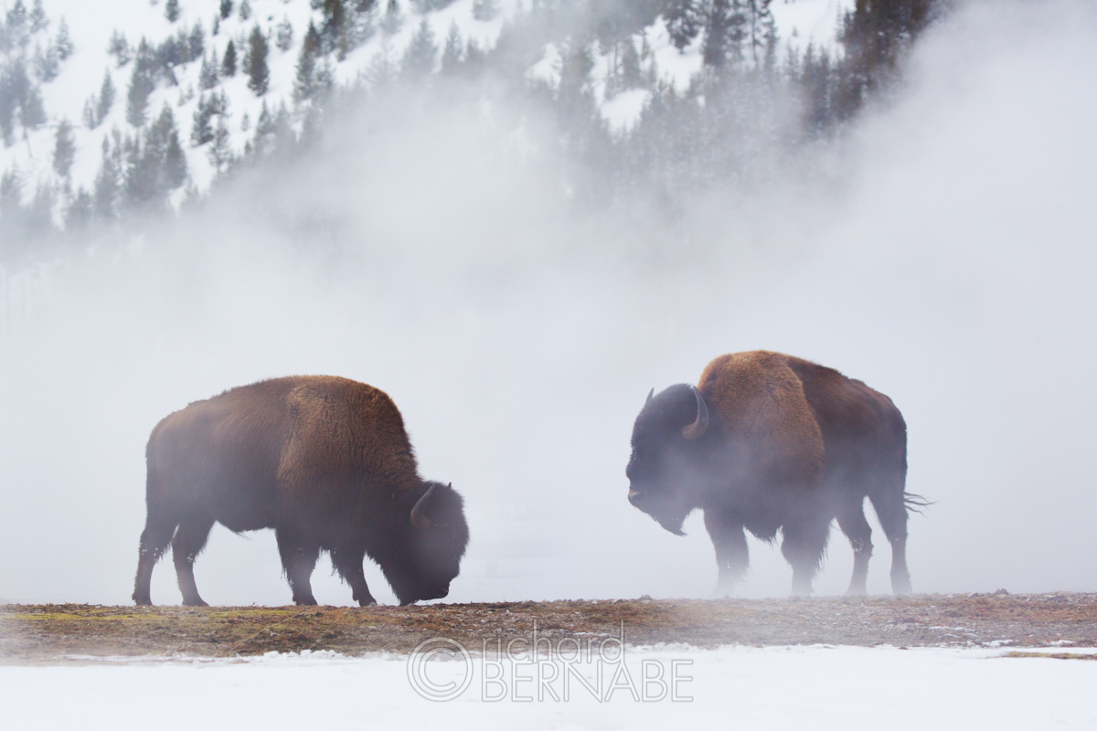 National Parks for Photography