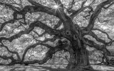 Behind The Lens: The Angel Oak
