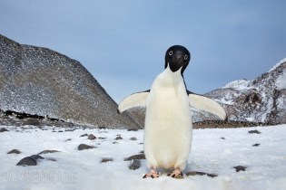 Behind The Lens: Paulet the Penguin