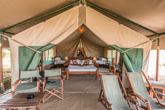 kicheche mara camp masai mara photo safari