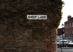 Sheep-Lane