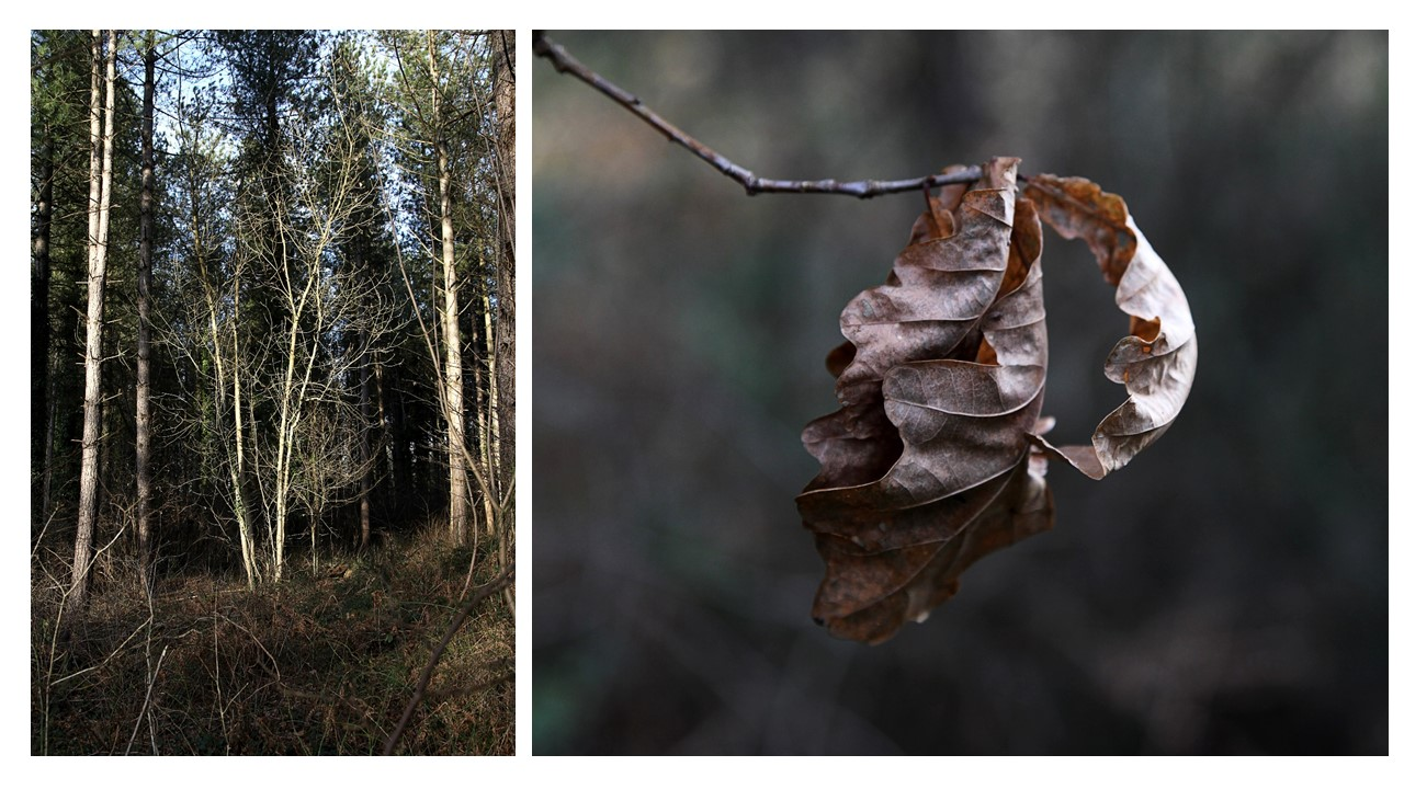 Forest of Bere, Hampshire