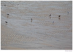 St Ives D7 145 e © II resize