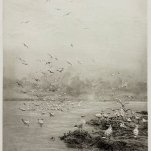 WILLIAM LIONEL WYLLIE-ETCHING-GULLS
