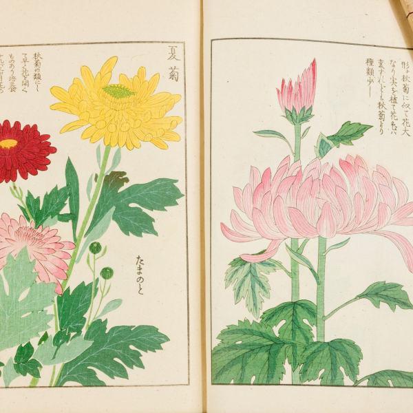 HONZO ZUFU-EXTREMELY RARE COMPLETE SET BY IWASAKI TSUNEMASA