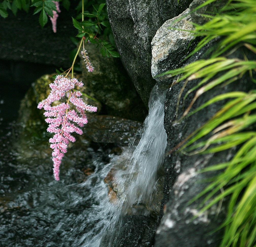 Pink Flowers with Waterfall - New York Botanical Gardens