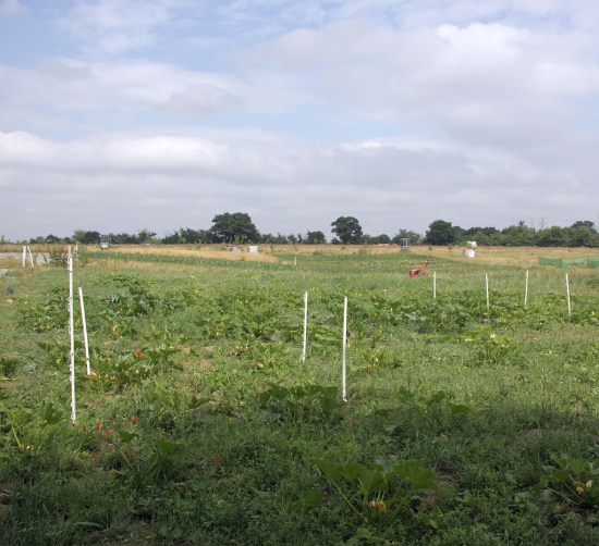 marked test and control plots