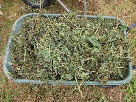 Nettles and comfrey: 1 wheelbarrow load