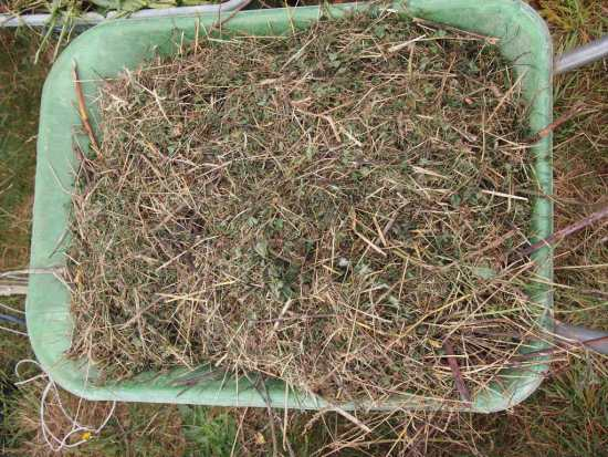 Grass and clover with some nettles: 1 wheelbarrow load