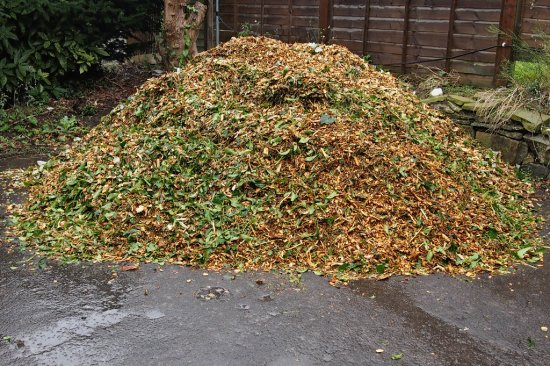 scrounged heap of chipped tree prunings