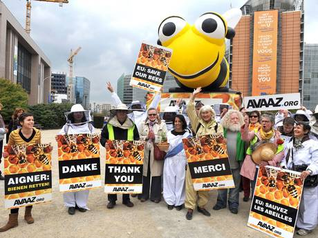 Avaaz Bee Campaign
