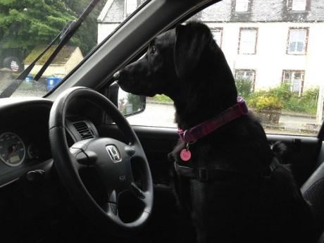 Sadie Drives