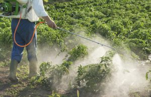 Man spraying vegetables in the garden. Image by The Organic Center