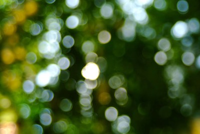 bamboo backlit-5-2