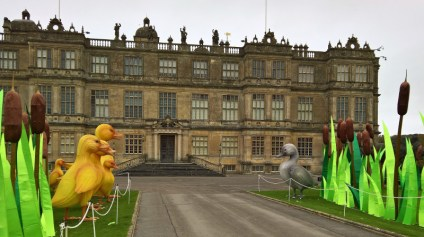 The Ducklings of Longleat