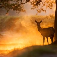 cropped-Richmond-Park-30-07-12_0013-Red-Deer-1.jpg