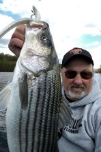 """9"""" Slug-Gos -- either Ice Shad or Albino Shad, were the hot ticket for bigger fish today"""
